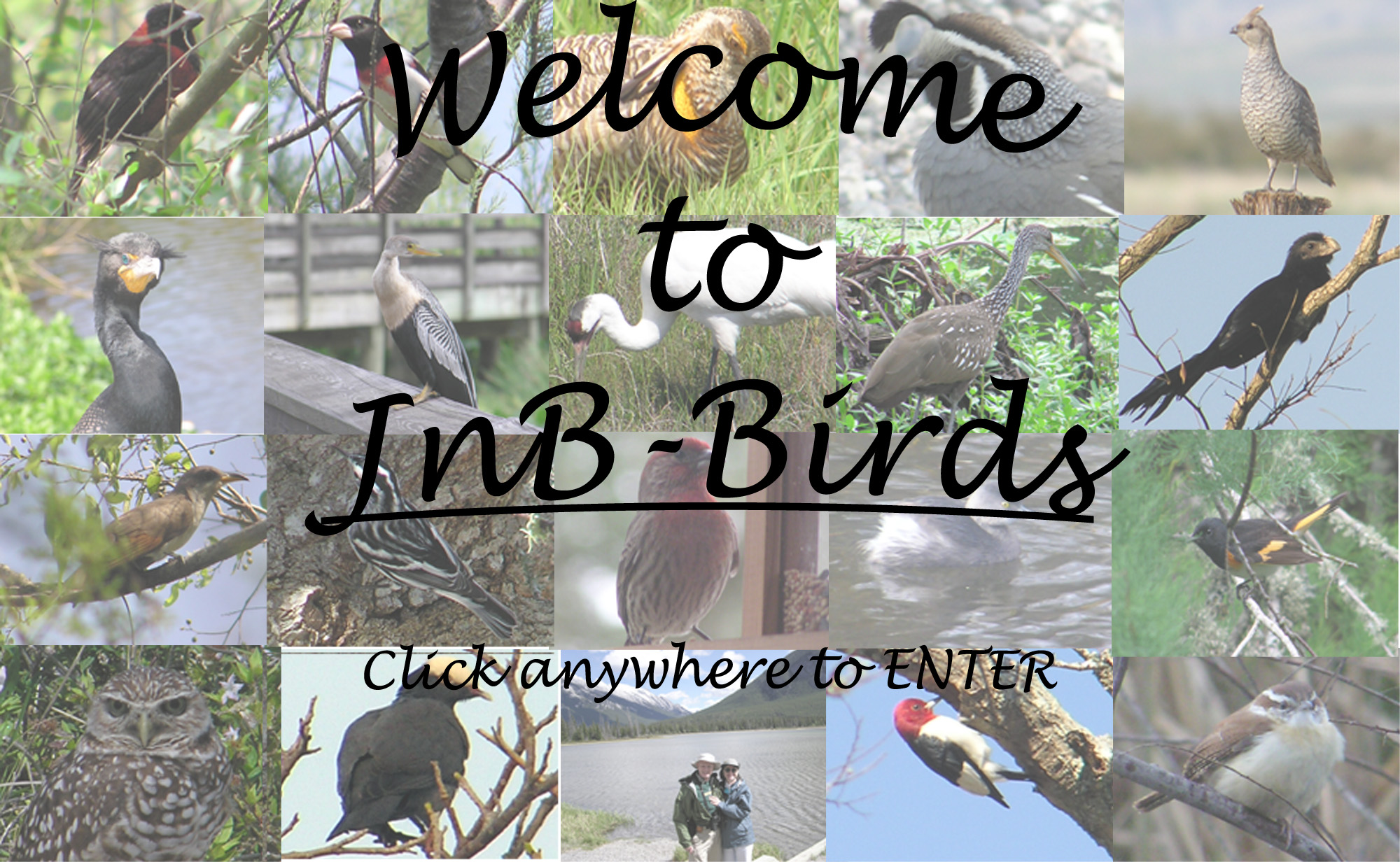 Click anywhere in the picture to ENTER Jnb-Birds.